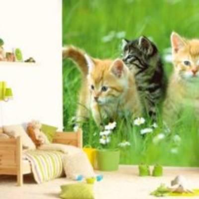 Фотообои на стену - правильный выбор!